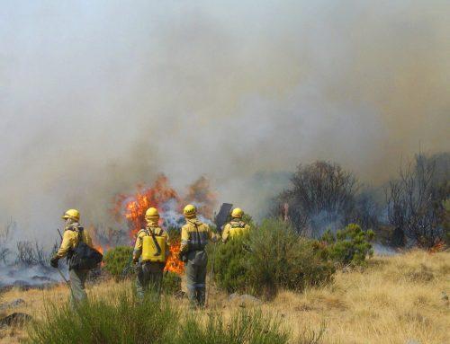 ¿Cómo actuar en caso de incendio en el monte?