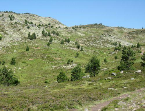 Covaleda acogerá el III Encuentro de Corredoras por Montaña FEDME